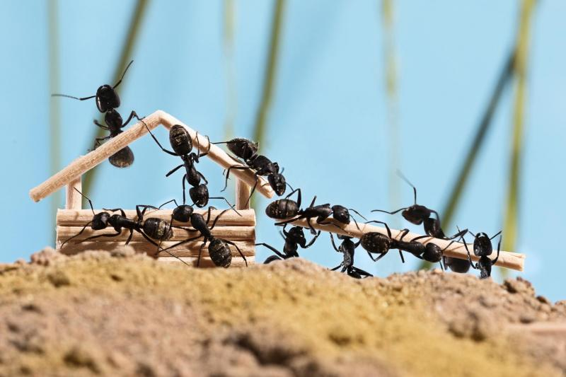 蟻 駆除 小さい 蟻の駆除方法 家のあるもので簡単にできる方法と寄せ付けない対策 蟻駆除:16,500円~アリ駆除のプロが対応&ご相談無料 アリ駆除navi